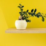 An indoor plant near the yellow colored wall.