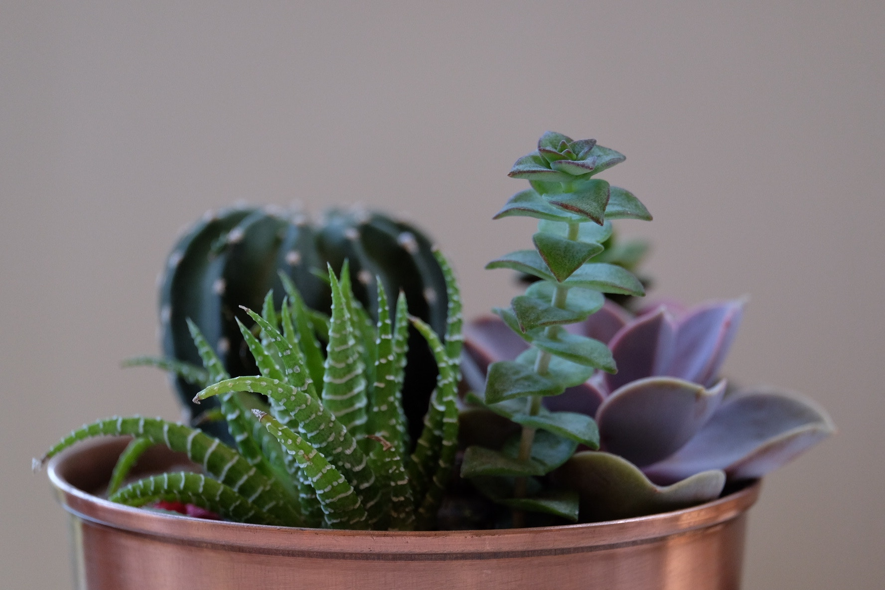Money plants are considered as one of the many Feng Shui Myths.