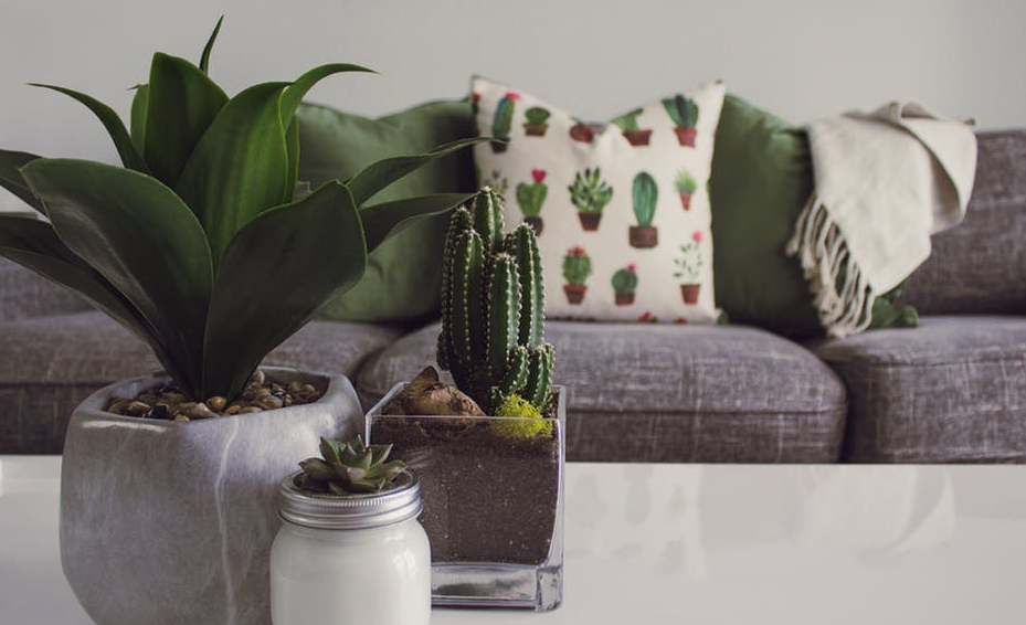Indoor plants are essential in creating a good feng shui home.